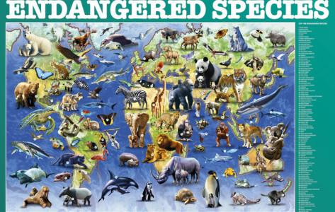 Endangered Animals and Species