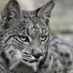 Revisiting Endangered Animals