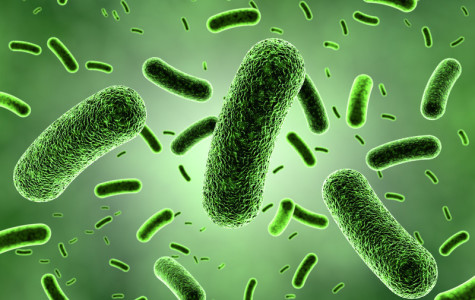 The Great and Useful... Bacteria!