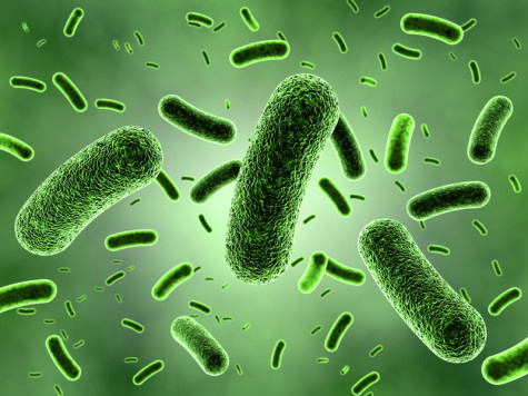 The Great and Useful… Bacteria!