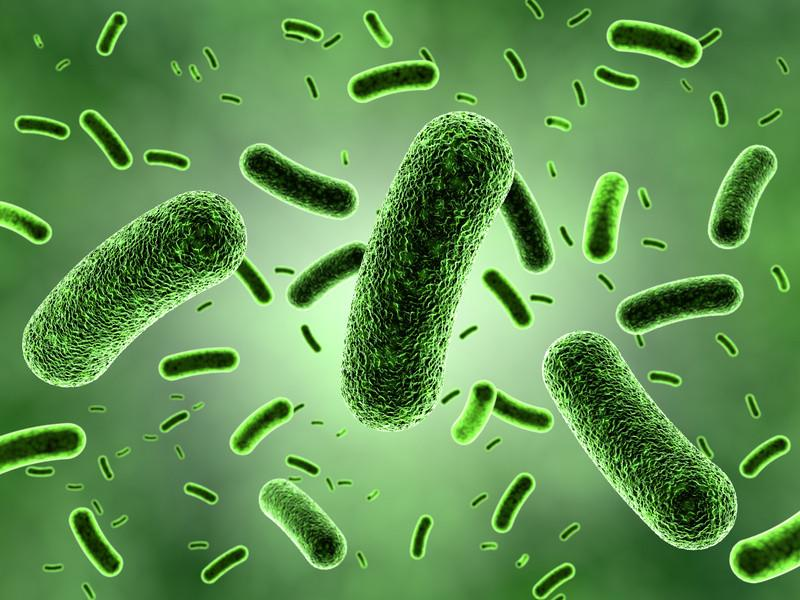The+Great+and+Useful...+Bacteria%21