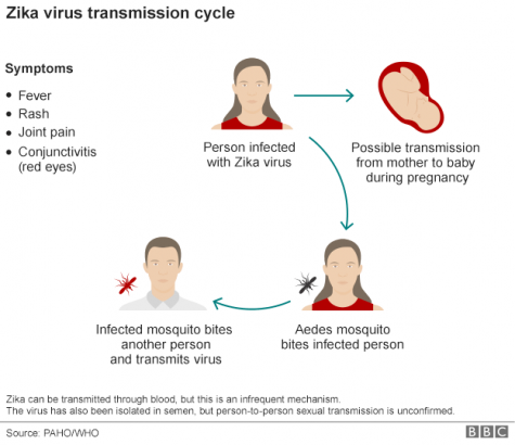 The Zika Virus Outbreak