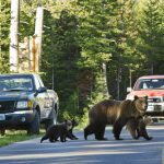 Protect the Bears?