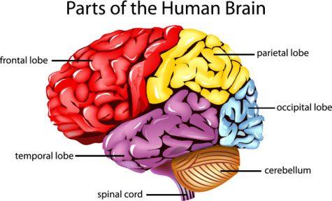 The Secrets of the Human Brain
