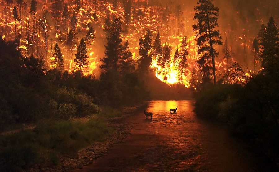 Ending Wildfires Before They End Us!