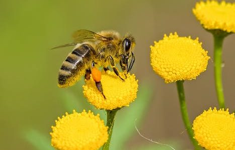 To Bee Gone