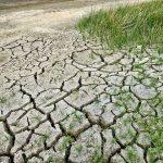 Reversing Desertification